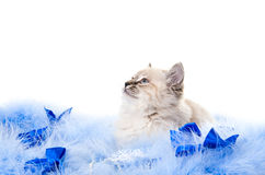 Kitten on New Year's blue fluffy Royalty Free Stock Photos
