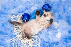 Kitten on New Year's blue fluffy coating Stock Photos