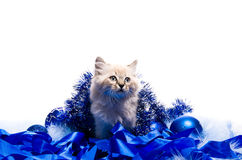 Kitten on New Year's blue fluffy coating Royalty Free Stock Image