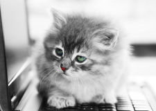 A kitten on the notebook Stock Photography