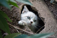 A kitten is observing you. A little white cat is observing you from a hole Stock Photos