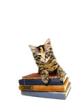 Kitten on old Books. Kitten leaning on old books isolated Royalty Free Stock Photo