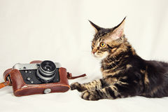 Kitten and old camera Royalty Free Stock Images