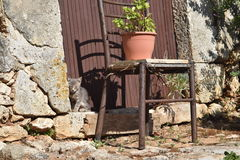 Kitten and an old chair. Little kitten hiding in alleys and corners of starch is a showcase Greece. Monastery in Anaforintia on the island of Zakynthos is rich Royalty Free Stock Image