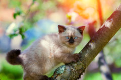 Kitten On The Tree Royalty Free Stock Photography