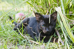 Kitten with one eye Royalty Free Stock Photography