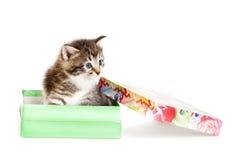 Kitten in open gift box Stock Photography
