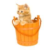 Kitten in an orange barrel. A yellow kitten sits inside of an orange barrel that is used for Halloween decorations stock photo