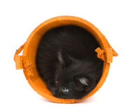 Kitten and orange barrel Stock Image