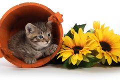 Kitten in orange bucket with fall leaves royalty free stock images