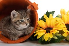 Kitten in orange bucket with fall leaves royalty free stock photo