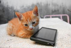 kitten orange-red small, a cat with cell phone black on table polished stone royalty free stock photos