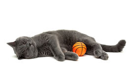 Kitten and an orange rubber ball on a white background Stock Image