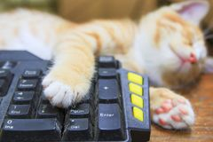 Kitten orange sleeping on Keyboard use of technology computer. concept business.  stock images