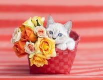 Kitten Kitten Orange Basket roses. White Siamese kitten inside an orange basket with orange and yellow rose bouquet of flowers, on top of an orange striped royalty free stock photography