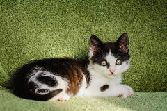 Kitten. Outbred Kitten Is Lying On A Green Couch Stock Photography