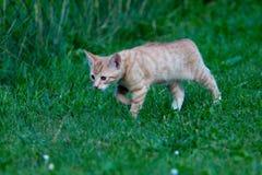 Kitten outdoors Stock Images