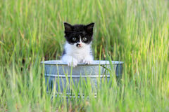 Kitten Outdoors in Green Tall Grass on a Sunny Day Stock Images