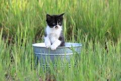 Kitten Outdoors na grama alta verde em Sunny Day Imagens de Stock