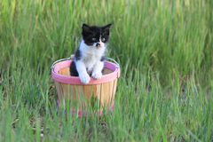 Kitten Outdoors na grama alta verde em Sunny Day foto de stock royalty free