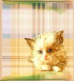 Kitten over checked background Stock Images