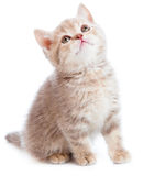 Kitten over white Stock Photo
