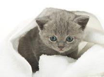Kitten over white Royalty Free Stock Photos