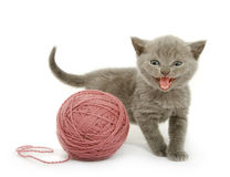 Kitten over white Stock Images
