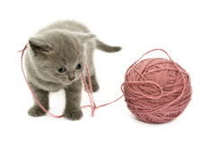 Kitten over white Royalty Free Stock Photography