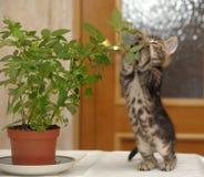 Kitten overturning flower Royalty Free Stock Images