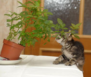 Kitten overturning flower Stock Photo