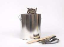 Kitten in a paint can Royalty Free Stock Photos