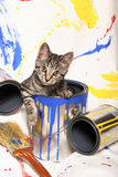 Kitten and Paint Cans. A little tiger kitten sits inside an empty paint can in front of a splatter backdrop royalty free stock photo