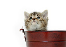 Kitten in a pale Royalty Free Stock Photography