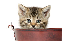 Kitten in a pale Royalty Free Stock Photos