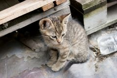 Kitten between pallets. Abadoned kitten, lonely, young cat, rural catn Stock Photos