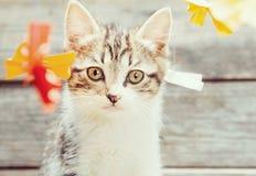 Kitten among paper bows Stock Photo