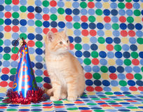 Kitten and party hat Royalty Free Stock Images