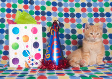 Kitten with party hat and gift bag Stock Photo