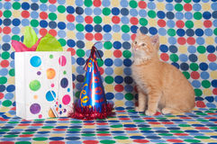 Kitten with party hat and gift bag Stock Photography