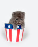 Kitten in patriotic flowerpot Royalty Free Stock Image