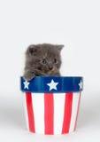 Kitten in patriotic flowerpot Royalty Free Stock Images