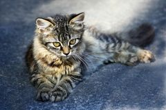 Kitten on the pavement. Royalty Free Stock Image