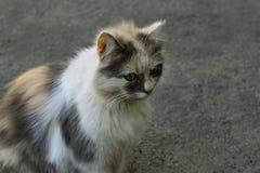 Kitten on the pavement Stock Image