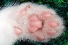 Kitten paw Stock Images