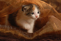 Kitten peaking out from blanket Royalty Free Stock Image