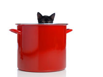Kitten Peeking out of Pot. A kitten peeking out of a large red pot Royalty Free Stock Images