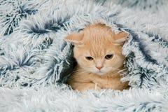 Kitten peeking out from under the blanket Stock Photos