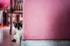 Kitten peeking in Stock Photos