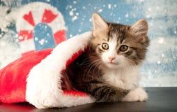 Kitten Peeks de olhos brilhantes fora de uma meia do Natal Imagens de Stock Royalty Free